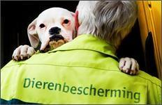 Dierenbescherming Drenthe